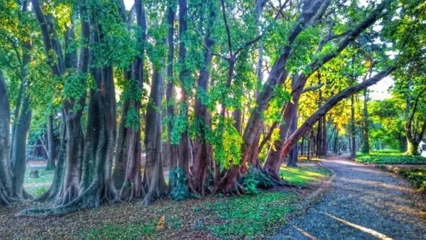 Ao visitar o Museu Afro-Brasileiro, curta o verde do parque Ibirapuera