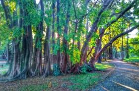 Conheça seis museus com jardins maravilhosos em SP