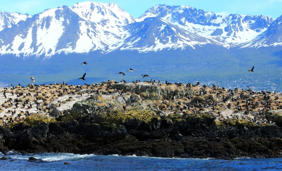 Pássaros patagônicos são estrelas nesse passeio pelo Canal Beagle, no Ushuaia. É possível ver Pássaros onde apreciaremos aves marinhas fueguinas como: Skúas, Albatroz de Ceja Negra, Patos Vapor, Cauquenes, Gaivotas (foto Thinkstock)