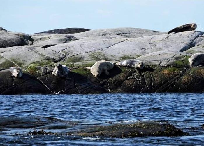 No caminho, o safari passa por ilhotas que são casas de focas