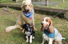 Conheça a primeira pousada que recebeu selo pet friendly no Brasil