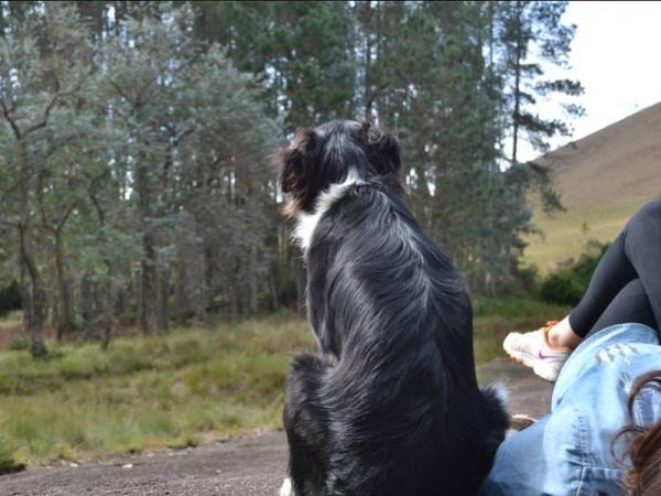 Final de semana nas montanhas fica perfeito na Encanto da bocaina, onde seu cão é bem-vindo (foto: Divulgação)