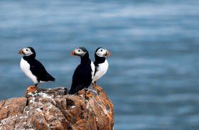 Safari no mar da Noruega leva à misteriosa Ilha dos Pássaros