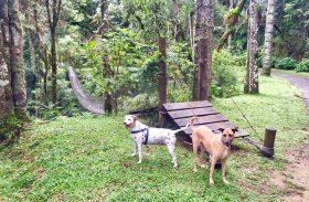 Viagem com cães e spa nas montanhas! Toriba oferece final de semana inesquecível