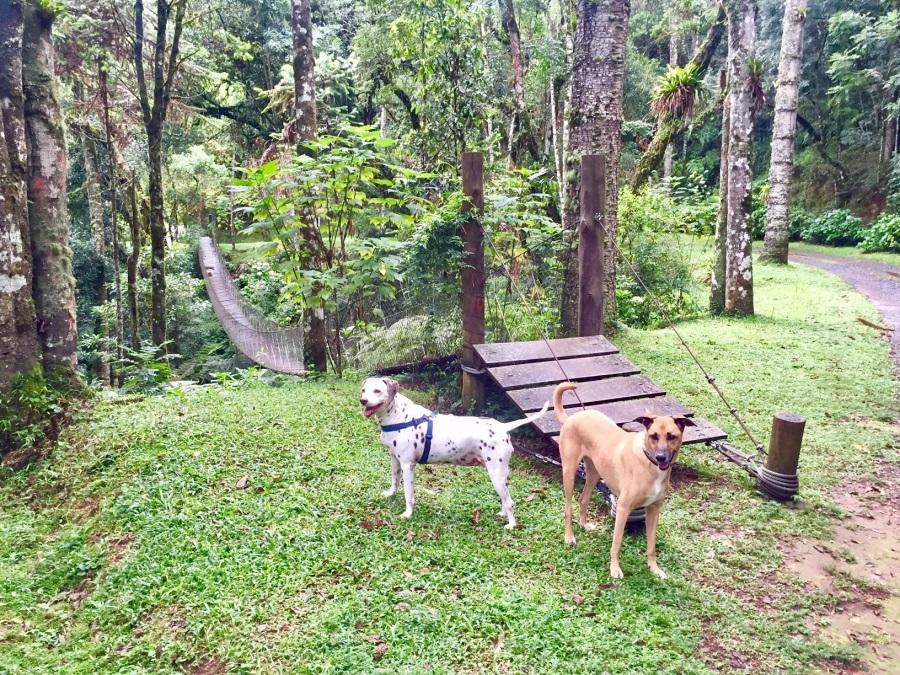 Maga e Juju, as #cadelasviajantes, aproveitam trilha do hotel
