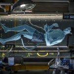 Dentro do simulador 3 D Flight of Passage, de Pandora, na Disney, você passa pelo laboratório do filme Avatar