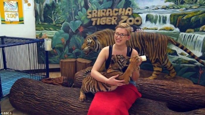 Katie se finge de turista para captar as crueldades atrás das fotos com tigres