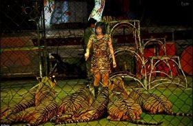 Tigres são espancados com vara de metal para tirar fotos com turistas