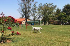Descubra o primeiro parque só para cães em resort pet friendly de Brotas