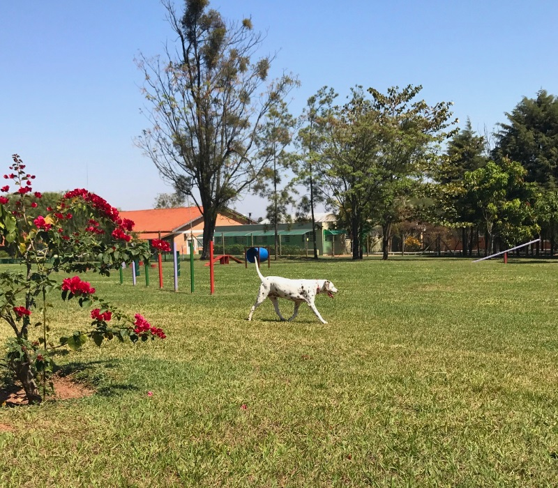 Maga brinca no gramado gigante do Dog Park