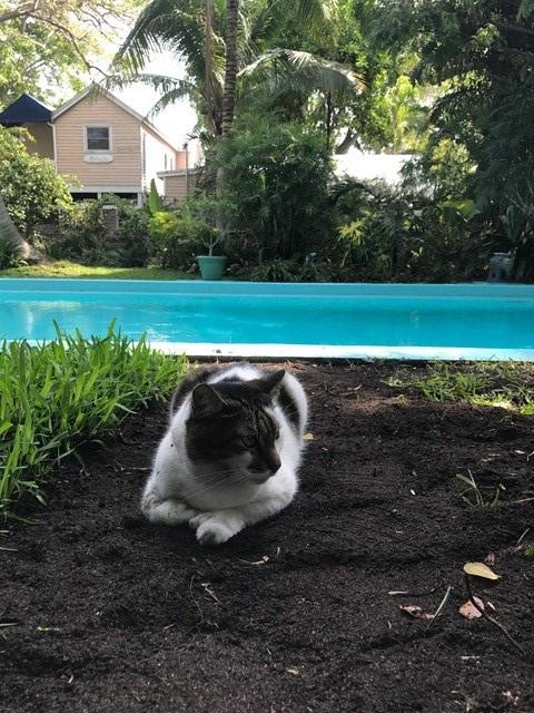 gatos hemingway lado b viagem
