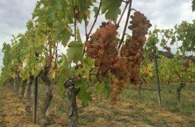 Vinícolas na França! Vinhos de Gaillac escondem processo raro de produção
