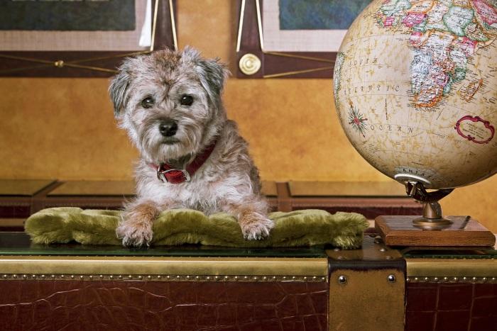 Cães são recebidos como filhos nos 60 hotéis da rede Kimpton. Na Filadélfia, bichos abandonados ainda ganham lar com a ajuda do hotel