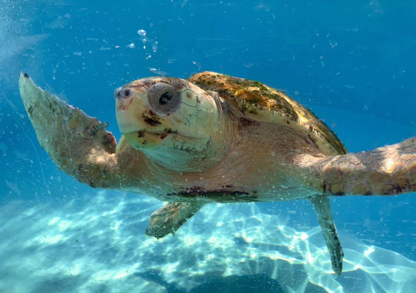 hospital tartarugas em palm beaches